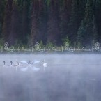 Alaska, il capo di volo dei cesna, occupato all'alba dai suoi naturali proprietari