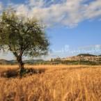 img_7946-il-grano-fa-da-cornice-al-paese-di-assisi