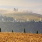 img_8446-val-dorciatoscana-la-chiesetta-di-vitaleta-con-il-grano